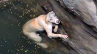 流浪狗失足掉进井里,泡了3天濒临死亡,男子勇救后意外发生!