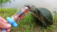 国外小伙用小鱼制作冰棍,你猜乌龟喜欢吃吗?一起来见识下!