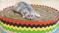 用60张废纸板制作巨型猫抓板,撒上猫薄荷,猫:这谁顶得住啊!