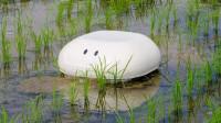 """日本发明超萌""""机器鸭"""",稻田里游一游,不用施肥和打药!"""