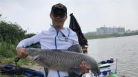 白条游钓库战大青鱼,9米的长杆拉的呼呼响,这也太刺激了吧