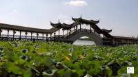 2018年9月29日锦溪古镇风景最美的地方古莲池
