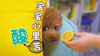 听说狗狗什么东西都能当玩具,于是铲屎官亮出了柠檬:你走开!