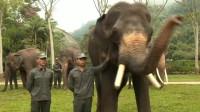 黄晓明、沙溢约会象王,象王用其灵敏的鼻子与其问好