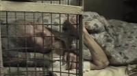 这里的人一生都住在笼子里,为什么这么残忍,原因让人泪目
