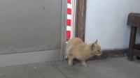 果然是聪明的猫咪啊,从门缝里钻进屋里都警惕得很呐!