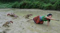女子野外捉螃蟹,数量太多被夹的乱叫,最后全部烤着吃!
