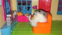 仓鼠住进大豪宅,边吃零食边看电视,睡觉前还能在浴缸里洗个澡