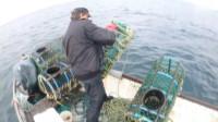 赶海大叔开快艇出门收地笼,谁知到里面都是深海大龙虾,赚爆了!