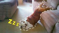 养了狗狗之后,主人再也不能睡懒觉!