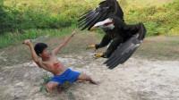 """小孩""""徒手""""抓老鹰,镜头记录下全过程,每个动作都让人毛骨悚然!"""