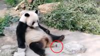 素质!北京动物园游客扔石头砸向熊猫 熊猫浑身一颤被吓到