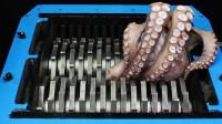 老外在粉碎机中放章鱼,30秒后失控了,网友:这声音听着太爽了