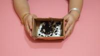 消灭蟑螂别再用药了,只需一个空纸盒,就能将家里的蟑螂整窝端掉