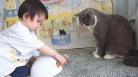2岁小宝宝学习照顾三只猫咪!猫:这家伙是来搞笑的吗?