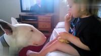 小宝宝和狗狗玩耍,汪星人表示很生气,画面太逗了