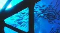 2019海洋嘉年华暨亚洲潜水展在京开幕 北京您早 20190717 高清