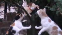 铲屎官用玩具吓唬猫咪,结果令人非常满意,看到最后我笑疯了!