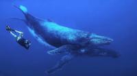 酷玩世界09期:与座头鲸同游,跟体重30吨的动物一起游泳是什么体验?