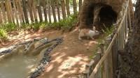 农民兄弟在荒野为兔子建造了豪华兔舍  还配备了泳池  网友:这绝对是豪宅