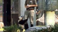 动物园里大熊猫绝食,是因为伤了人委屈? 原来原因在饲养员身上