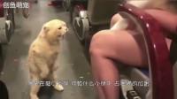 猫咪第一次坐火车,溜一圈回来一见主人抱着别的猫,居然发飙了!