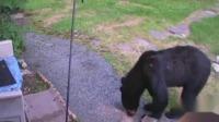 美国:居民家遭黑熊闯入  邻居忠犬英勇出手将其赶跑 第一时间 20190718