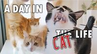 猫的一天是怎么过的?