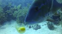 在深海中打开生鸡蛋,刚打开的鸡蛋被路过的鱼一口吞掉,简直太神奇