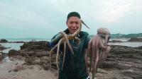 当赶海遇到大退潮,就遍地都是螃蟹,天黑前就抓了一大堆海货