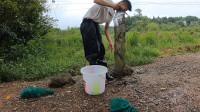小伙暴雨过后来收网,小水塘果然有大货,猜猜这条黄鳝有多大