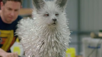 老外自制水晶狐狸,和电影中一模一样,这下长见识了