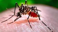 蚊子最怕它,放在家里房间角落,蚊子来一只死一只,太方便了