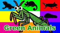 绿色小动物玩具海星鳄鱼海龟图像绘画
