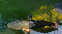 鱼的世界是怎样的?老外将摄像机绑鱼身上后,结果看到不一样的画面