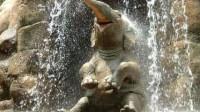 动物奇趣:饲养员正冲洗着马路,小象竟然跑来冲澡,隔着屏幕都感觉有趣!