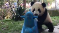动物园搞笑的一幕:奶妈拿起摇摇马就跑,小熊猫迈着短腿在后追