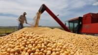 俄产中国大豆,抵达中国俄愿提供1770万亩土地后,事情有进展