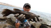 渔夫抓20个螃蟹做陷阱,抓到150元一斤的好货,赚翻了