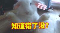 敢用爪子抓我,小兔崽子知道错了没!