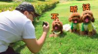 三只狗狗轮番抢镜,铲屎官气晕:拍个照,怎么这么难!