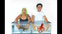 情侣挑战未知鱼缸,小伙放进奇怪动物,网友:想恢复单身?