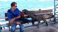 没见过这么不讲理的海豹,不光把游客赶走还躺下了!皮痒了!