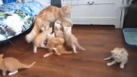 猫妈妈:这是一个错误的示范,其实这就是一个失误