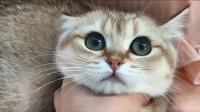 猫咪犯错就被骂?猫咪表示与我无瓜