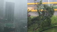 """实拍成都""""瀑布雨""""袭城:天空如""""末世""""般灰暗 大树被狂风吹倒"""