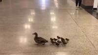 商场来了奇怪的客人,排队从大家脚边走过,保安你不管想扣工资啊