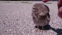 小伙回家路上,捡到一只猫头鹰宝宝,下一秒意外发生了!