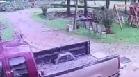 实拍!男子躲避龙卷风眼看大树砸来  慌乱中一个动作救了自己