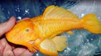 小伙河里捡到一条黄金鱼,养了10年舍不得吃,专家看后傻眼了